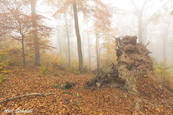 Gern wird geleugnet, dass Natur belassene Wälder und Urwälder im Vergleich mit Wirtschaftswäldern einen zwei- bis viermal so hohen Biomassevorrat und damit ein entsprechend höheres Kohlenstoff-Speicherniveau aufweisen. (Norbert Panek, 2014)