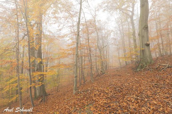 Wir brauchen endlich eine Waldwende, die die natürlichen Produktionskräfte des Waldes stärkt und nicht weiter schwächt. (Wilhelm Bode, 2019)