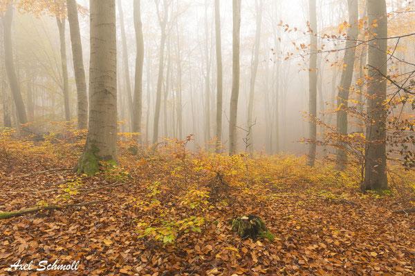 Glaube mir, ich habe es erfahren, du wirst mehr in den Wäldern finden als in den Büchern; Bäume und Steine werden dich lehren, was Du von keinem Lehrmeister hörst. (Bernhardt von Clairvaux)