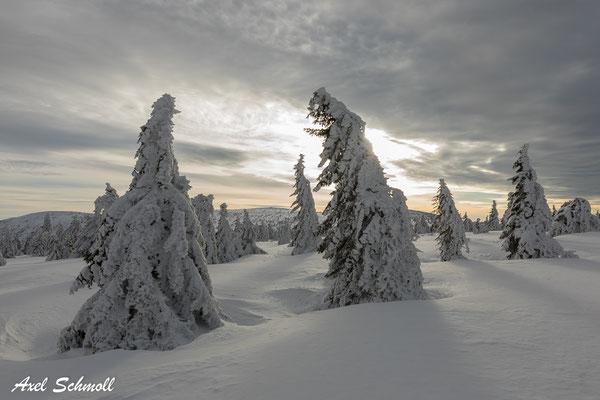 Schneegewänder im fahlen Winterlicht