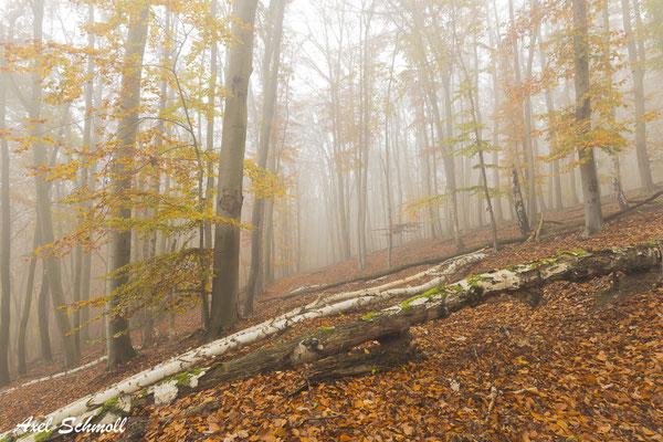 Wir dürfen den Wald nicht länger als Wirtschaftsbetrieb betrachten, sondern müssen endlich zur Kenntnis nehmen, dass wir die letzten naturnahen Ökosysteme an den Rand ihrer Überlebensfähigkeit gebracht haben. (Volker Ziesling, 2019)