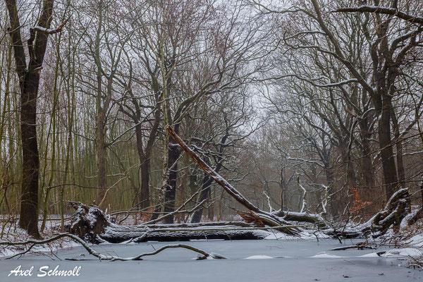 Leipziger Auwald im Winter