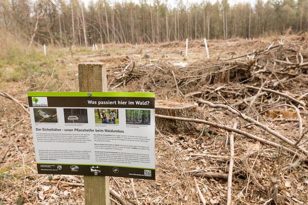 Infotafel an einem Kahlschlag (ca. 2 ha) zur Entwicklung artenreicher Eichen-Hainbuchenwälder im Rahmen des EU-Naturschutzprojektes.