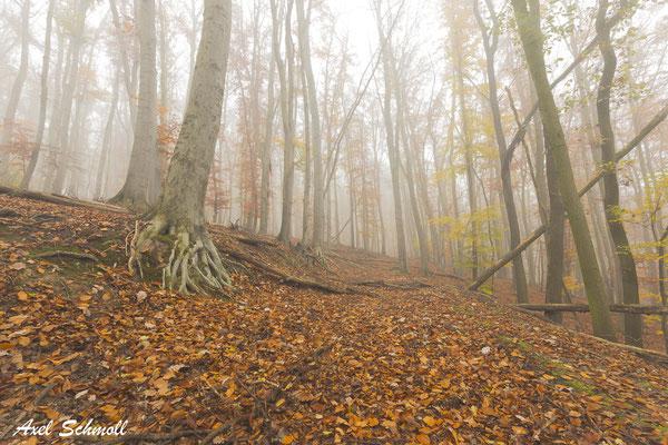 Die derzeitige Waldkrise in Deutschland ist nicht allein eine Folge des Klimawandels - auch die Art der Waldbewirtschaftung trägt eine erhebliche Mitverantwortung. (Pierre Ibisch, 2019)