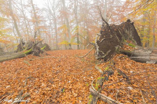 Die klimawandelgetriebenen Extreme treffen auf Forsten, die durch Zerschneidung und forstliche Nutzung viel anfälliger sind, als es naturnähere, struktur- und biomassereichere Wälder wären. (Pierre Ibisch, 2020)