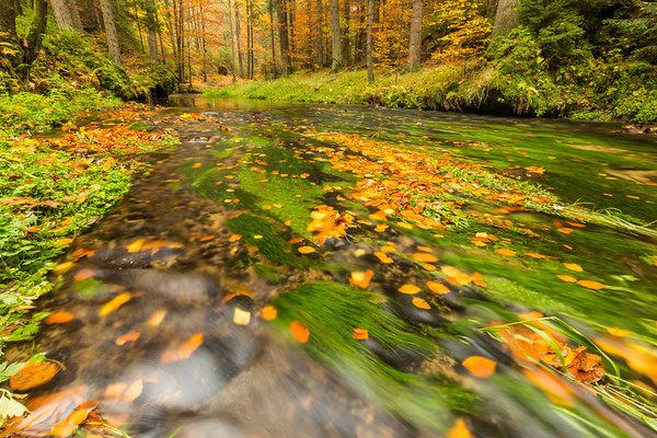 Kirnitzsch im Herbstgewand