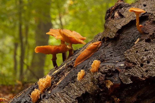 Pilze und Nacktschnecke