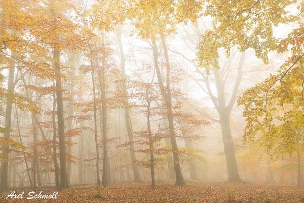 Seltsam, im Nebel zu wandern! Einsam ist jeder Busch und Stein, Kein Baum sieht den anderen, Jeder ist allein. (Herrmann Hesse)