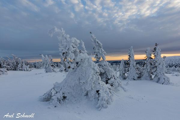 Im Schneegewande