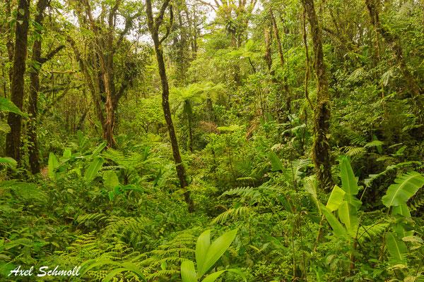 Reservat Santa Elena