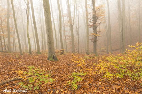 Die Wälder schweigen. Doch sie sind nicht stumm. Und wer auch kommen mag, sie trösten jeden. (Erich Kästner)
