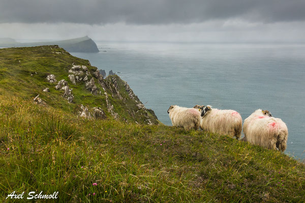 Irland - Westküste