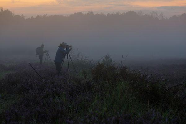 Heidefotografie im schwindenden Morgennebel