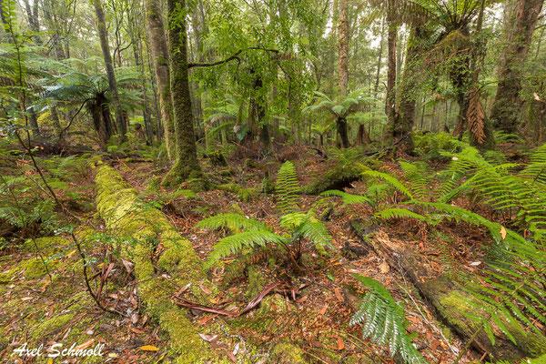 Regenwald in der Region Sumac - akut durch Rodung bedroht!
