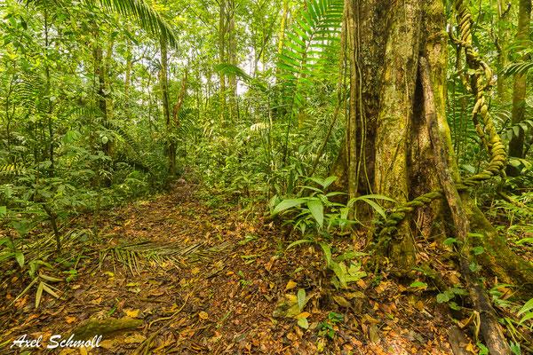 Regenwald bei Chilamate
