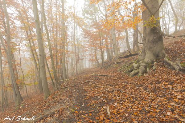 Weißt du nicht, dass die Wälder das Leben eines Landes sind? (Babylonische Keilschrift)