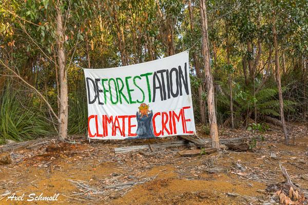 Rodung von Regenwäldern ist ein Klimaverbrechen