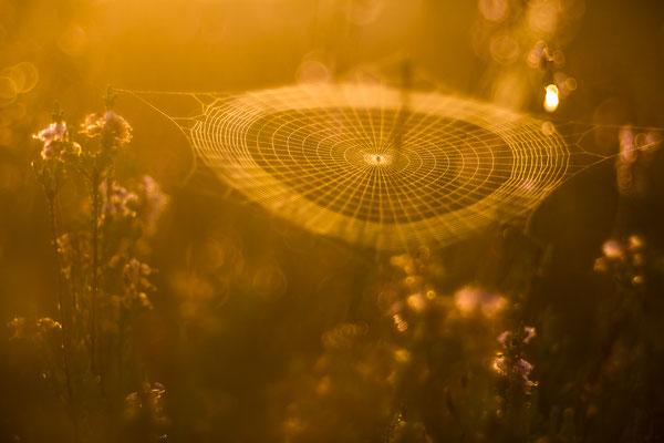 Symmetrie in der Spinnenkunst