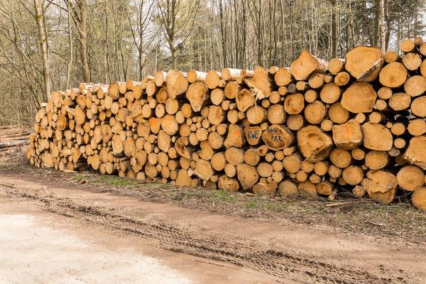RWE braucht anscheinend viel Holz.