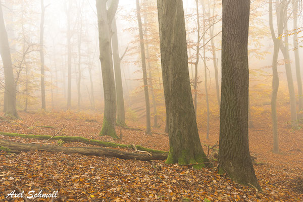 Habt Ehrfurcht vor dem Baum! Er ist ein einziges Wunder, und euren Vorfahren war er heilig. Die Feindschaft gegen den Baum ist ein Zeichen der Minderwertigkeit eines Volkes und von niedriger Gesinnung des Einzelnen. (Alexander von Humboldt)