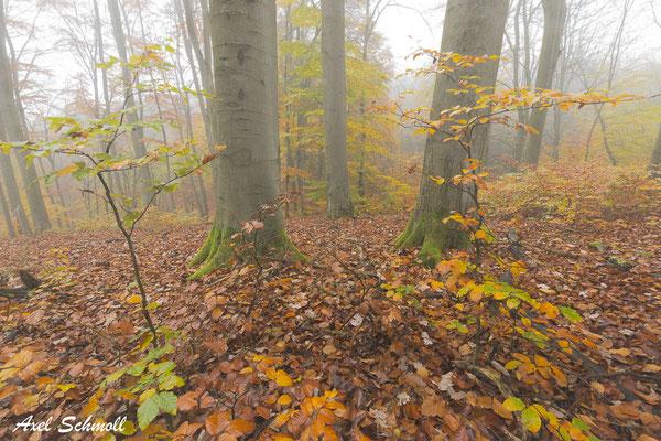 Die Natur können wir gar nicht kaputt machen, die wird sich immer wieder erholen. Der Wald kommt zurück. Es wäre nur schön, wenn wir dann noch da sind. (Peter Wohlleben, 2019)