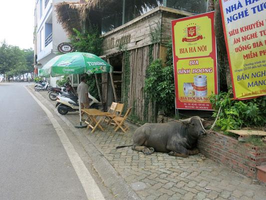 Mitten in Hanoi...