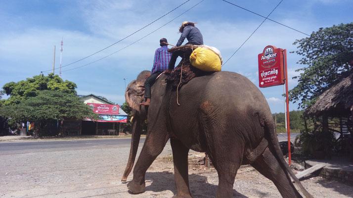 ...und ploetzlich laeuft da ein Elefant ueber die Strasse...