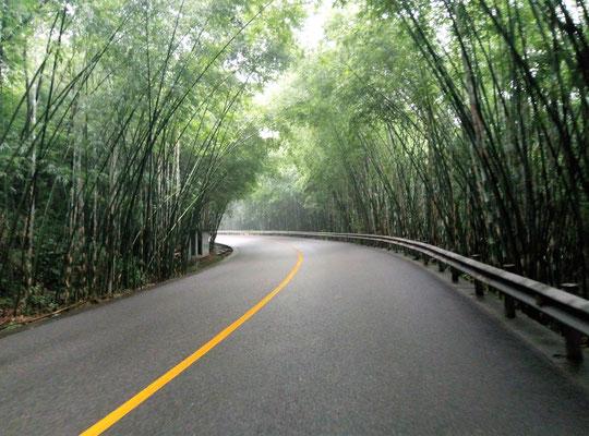Das ist ja mal ein schöner Bambus-Tunnel :)