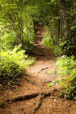 Chemin des Dioux (Saint Hilaire-du-Touvet)