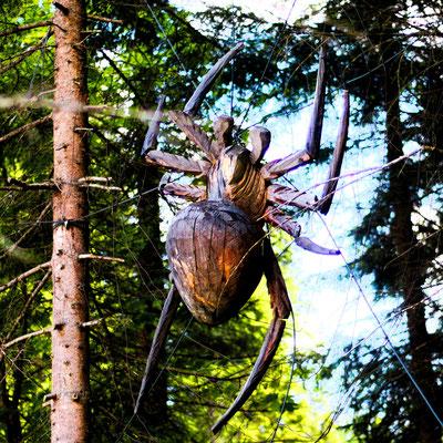 Spinne an der Hochthörlenhütte