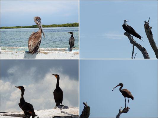 Wasservogelidylle -  Riviera Maya - Yucatán, Mexiko