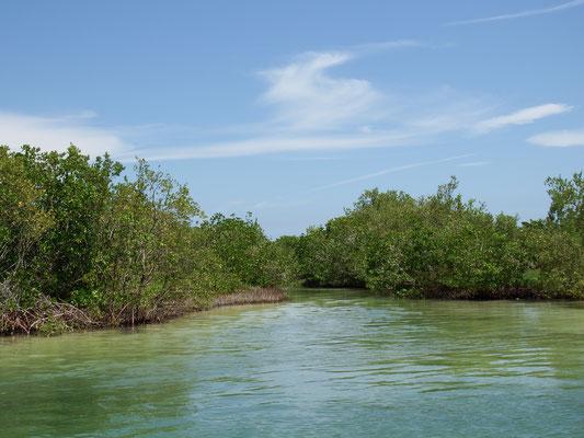 Rio Lagartos - Idylle -  Riviera Maya - Yucatán, Mexiko