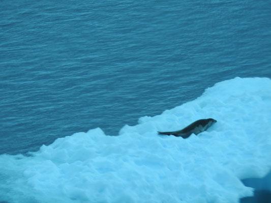 auf einer Eisscholle in der Antarktis