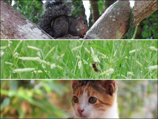 von oben nach unten: (1) auch in Mexiko gibt es Eichhörnchen (2) eine Erdbiene (3) Ist sie nicht ein wunderschönes Fotomodell?