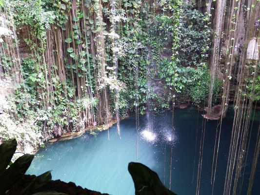 Blick von oben nach unten in die Cenote, Yucatán - Mexiko