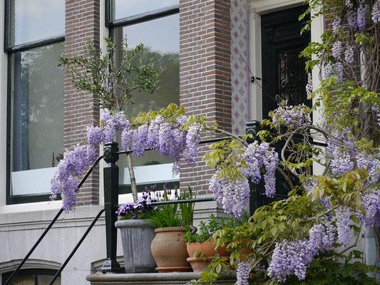 Wir (Kasimir, Cäsar und Fredi) sichten in Amsterdam typisch Niederländisches: Blumen vor Hauseingang
