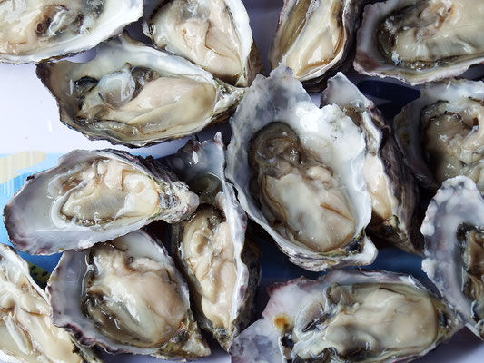 ... mit den leckersten Austern der Welt, ...