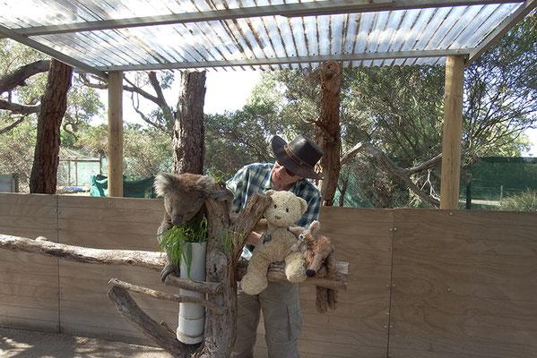 Na? Da guckt Ihr! Wir haben wahrhaftig neben einem Koala gesessen.