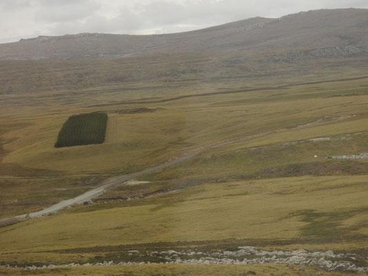 Na sowas, rechteckig - praktisch - gut, Aufforstung auf den Falklands