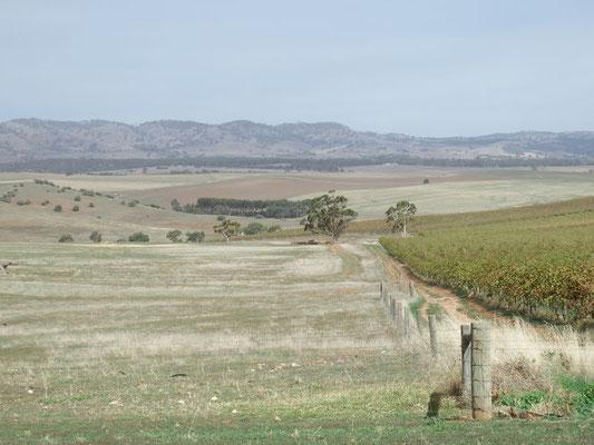 das Barossa Valley