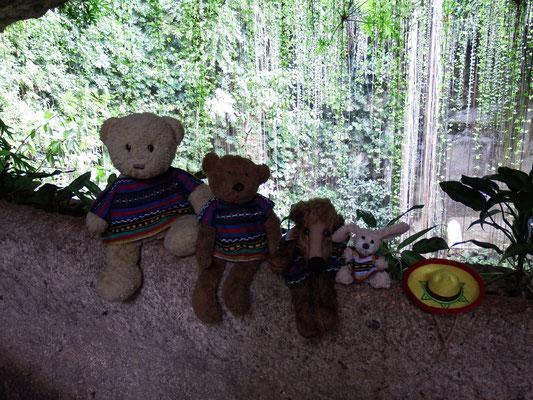 Wir, Kasimir - Cäsar - Fredi und Kerl, genießen einen Blick in die Cenote.