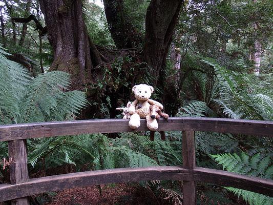 Wir im trockenen Regenwald.
