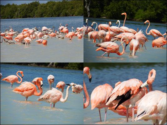 Flamingoidylle -  Riviera Maya - Yucatán, Mexiko