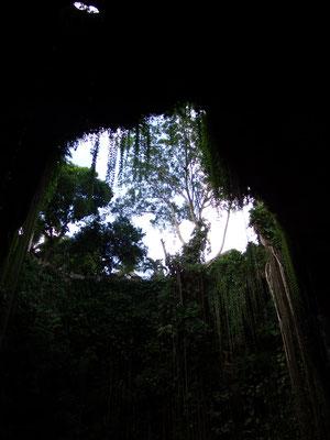 Blick von unten nach oben in der Cenote, Yucatán - Mexiko
