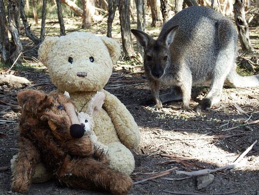 Wir mit einem Känguru.
