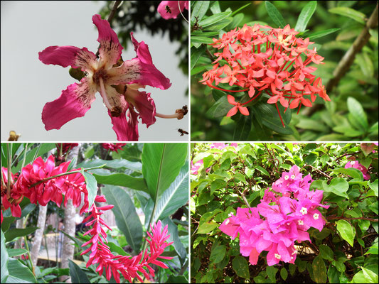 wunderhübsche Flora