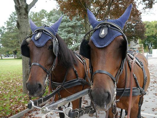 Kasimirs, Cäsars und Fredis Fiakerpferde auf dem Zentralfriedhof
