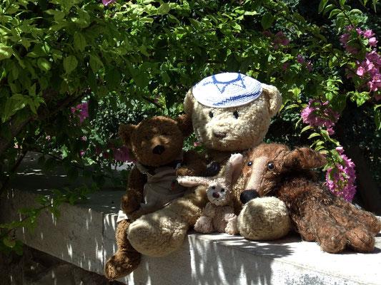Wir, Kasimir-Cäsar-Fredi und Kerl, im Garten Gethsemanes am Fuße des Ölbergs.
