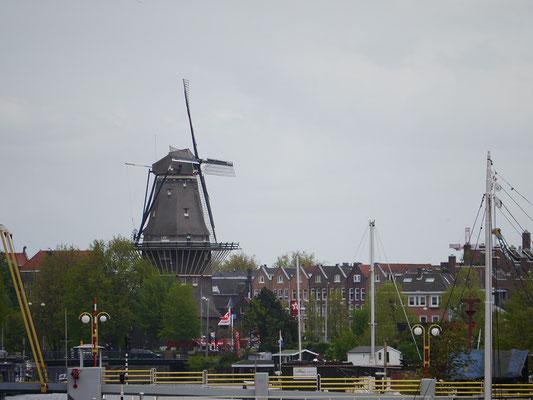 Wir (Kasimir, Cäsar und Fredi) sichten in Amsterdam typisch Niederländisches: Windmühle