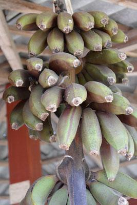 Bananen, klar!